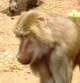The Israeli Primate Sanctuary Foundation IPSF