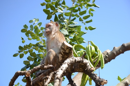 Mazor macaque monkeys arrive at our sanctuary